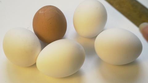 Hammer crash diffferent color egg, xenophobia, racism concept, crime Footage