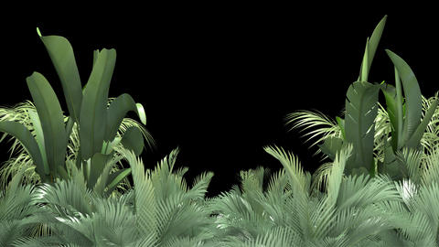 Tropical plant on an black background Animation