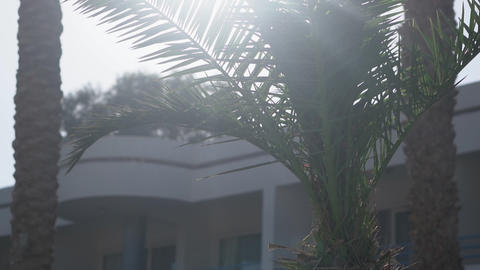 Palm tree in sunlight the action in the slow motion Footage