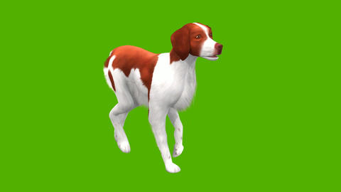 09 animation of dog moving and barking with green background Animation