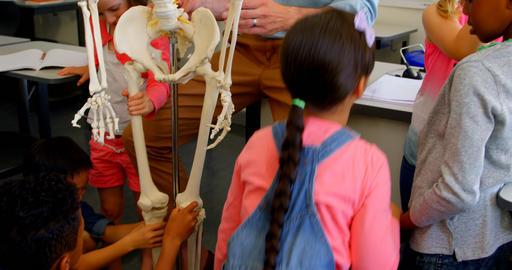 Multi-ethnic school kids fixing skeleton model in classroom at school 4k Live Action