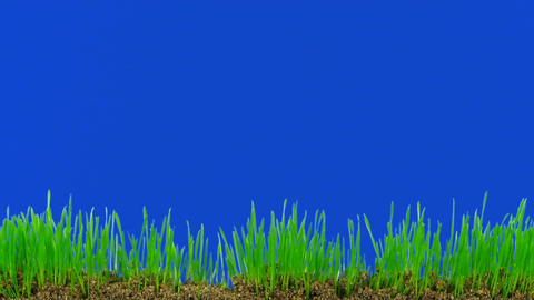 Time-lapse of growing decorative Easter grass against... Stock Video Footage