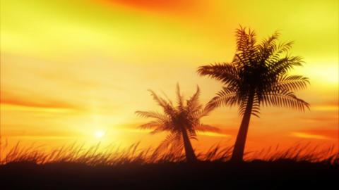 Wild Palms Stock Video Footage