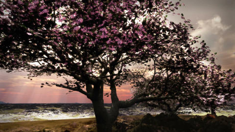 1079 Spring Snow Cherry Tree Landscape Nature Stock Video Footage
