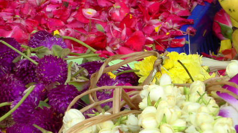 Indian Flowers Stock Video Footage