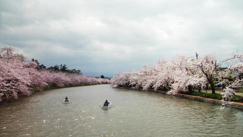 Rowing Boats Under Sakuras In Japan Stock Video Footage