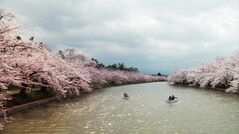 Rowing Boats Under Sakuras In Japan Footage