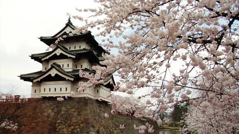 Sakura And Hirosaki Castle Stock Video Footage