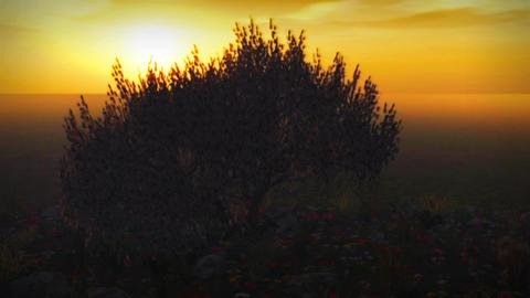 1037 Spring Storm Cherry Tree Sunset garden Stock Video Footage