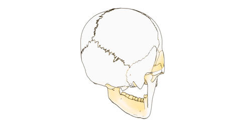 Skull Draw stock footage