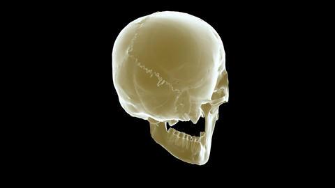 Skull Xray stock footage