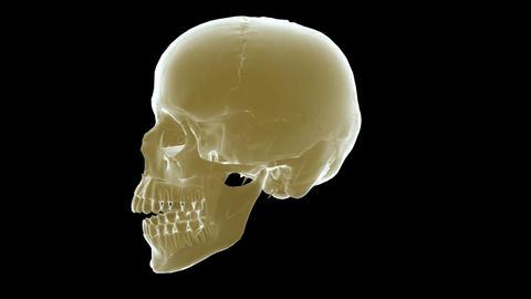 skull xray Stock Video Footage