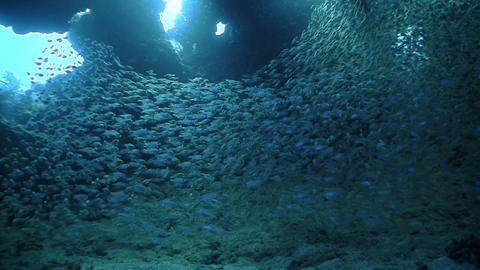 Huge Shoal Fish on Coral Reef, Red sea Live Action