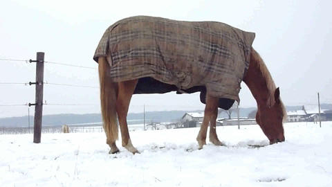 Horse eating by winter time Footage