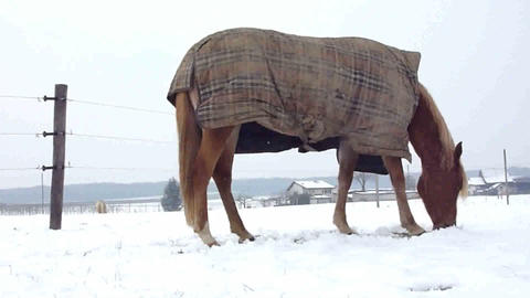 Horse eating by winter time Stock Video Footage