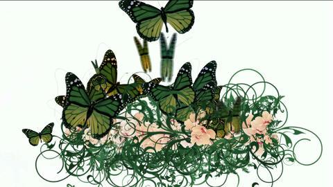 butterfly & flower Stock Video Footage