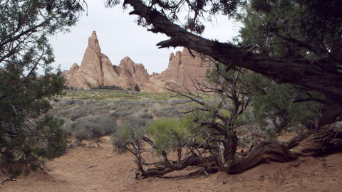 View through the pinyon pine trees Footage