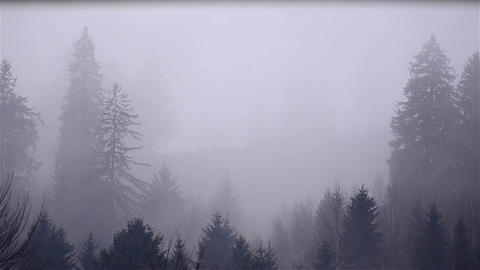 Fog in the early hours of the morning in coniferous forest Footage
