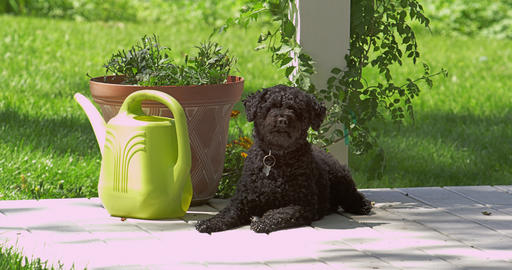 Static view of black dog sitting in the sun then stand up and walk away Footage