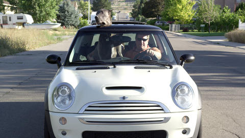 View from the front of a Mini Cooper driving down the road with a Great Dane sit Footage