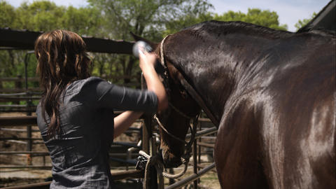 Slow motion shot of a woman grooming a horse Footage