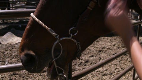 Tilt slow motion shot of a woman adjusting a bridle Live Action
