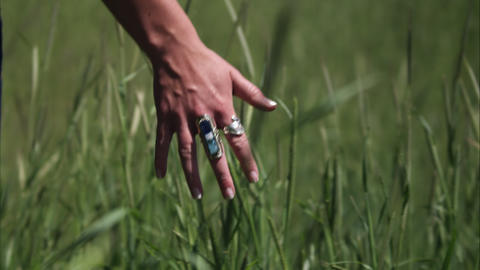 Slow motion shot of a woman's hand touching tall grass Footage