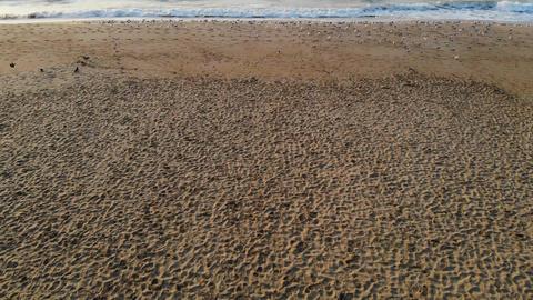 flock of seagulls flying over the haeundae beach Live Action