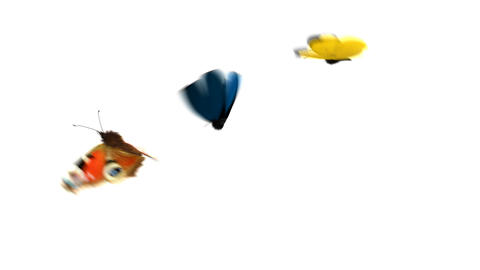 Three Butterflies Fly One After Another on a Green Background Animation