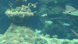 Underwater life of Fish Sharks Batoidea Footage