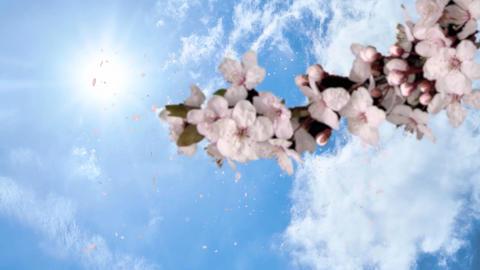 Spring logo (cherry blossom) Videos animados