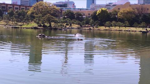 鴨・池・旧芝離宮恩賜庭園 ビデオ