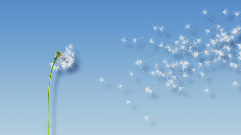 Dandelion Blue Shadow 4K Animation