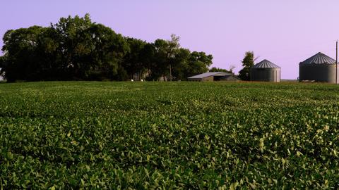 Farm Crops Footage