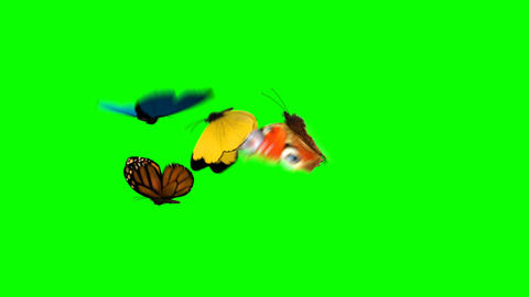 Butterflies Fly on a Green Background Animation