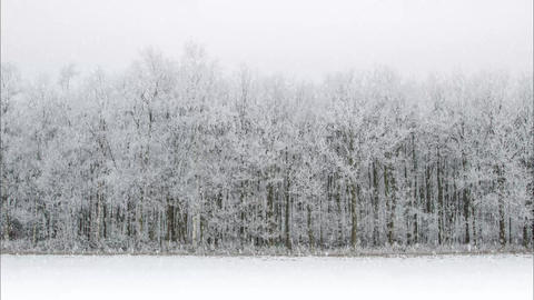 Realistic snowy forest landscape Stock Video Footage