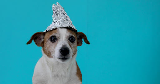 Scared dog in a foil hat Live Action