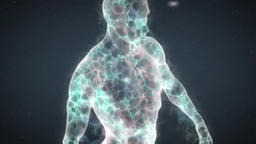Human Energy Body with Transparent Fluid Body (4k version) Animation