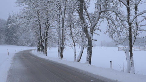 Wintry treelined road at a light snowing Footage