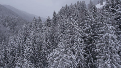 Aerial - Snow covering up the trees with a white cloak Footage