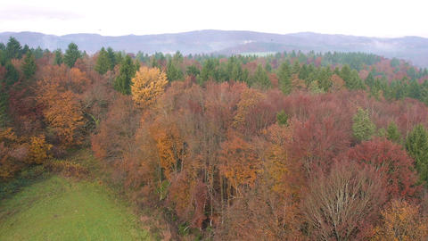 Aerial - Colorful autumn forest Footage
