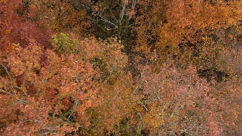 Aerial - Autumn forest. Leaves falling from the trees because of wind by drone Footage