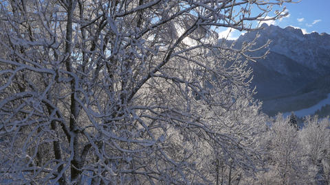 Aerial - Flight up the beautiful snowy tree Footage