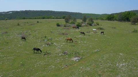 Aerial - Horses in pasture Footage