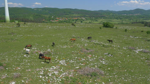 Aerial - Horses pasturing on a meadow away from the village in the background Footage