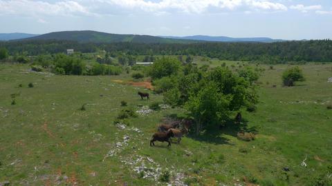 Aerial - Flight over donkeys on pasture Footage