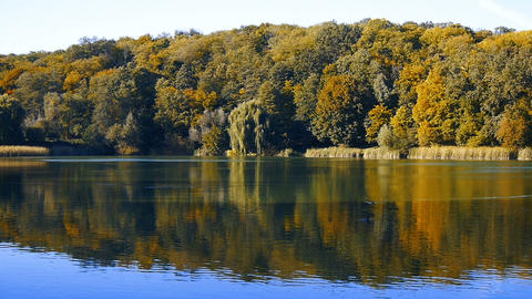 Great beautiful autumn landscape with lake and trees. overall plan Archivo