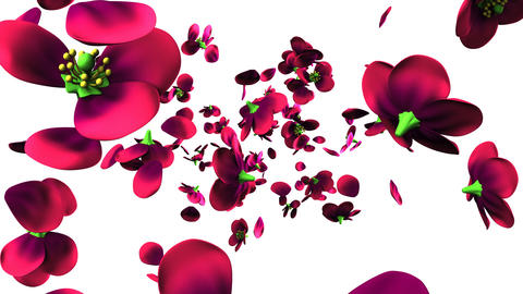 Purple flowers on white background CG動画