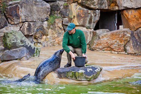 Fur seals feeding show at a Zoo フォト