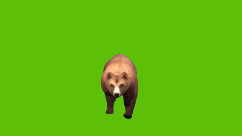 06 animated brownbear from front with green screen background Animation